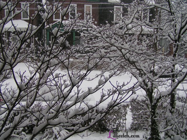 Snow in my window